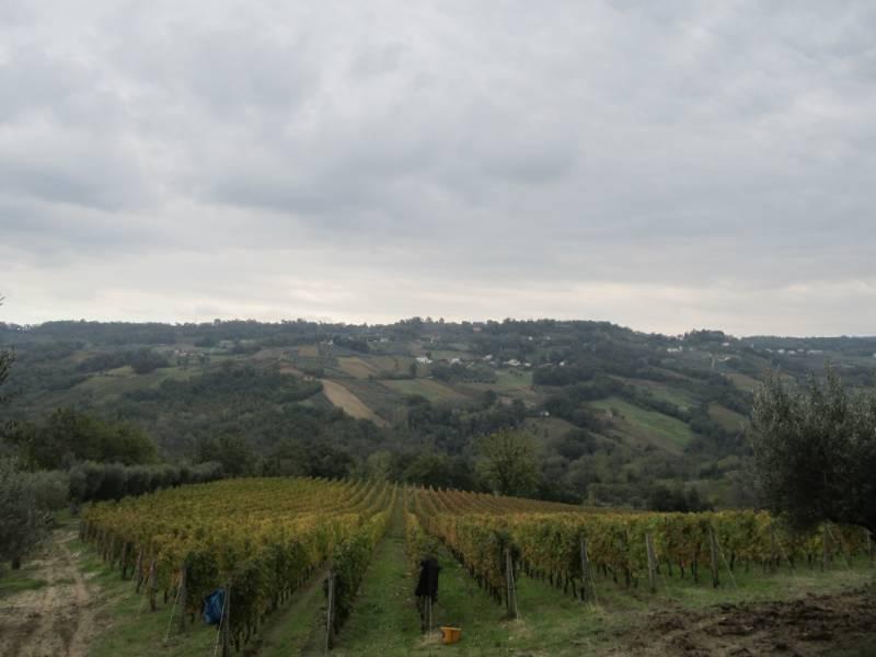 Italija 14 248_800x600