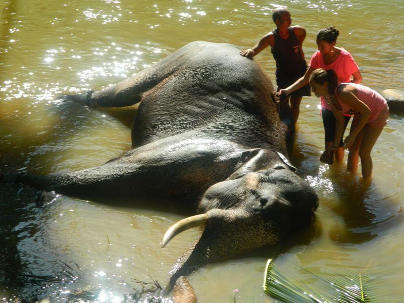 Sri Lanka - kupanje slona_800x600