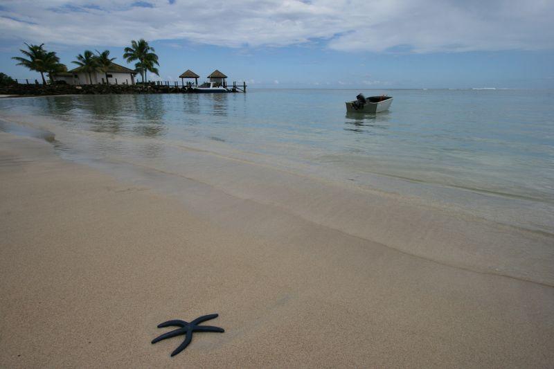 Samoa-Plava morska zvezda na plazi_800x533